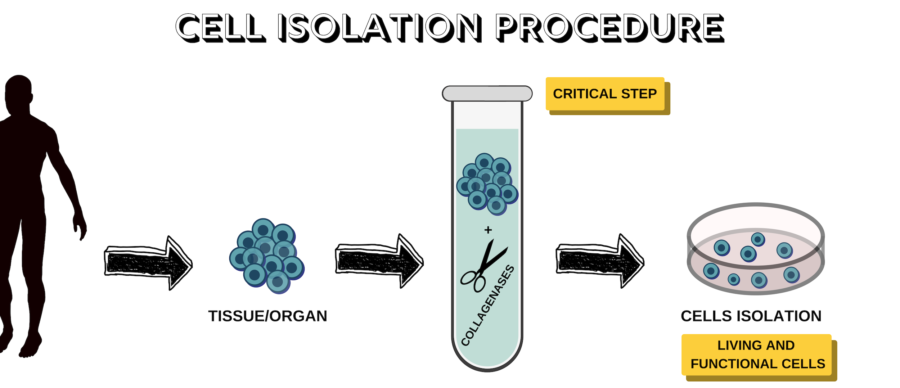 CELL ISOLATION PROCEDURE